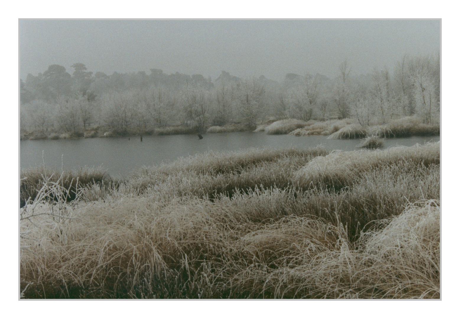 Winter im Venner Moor