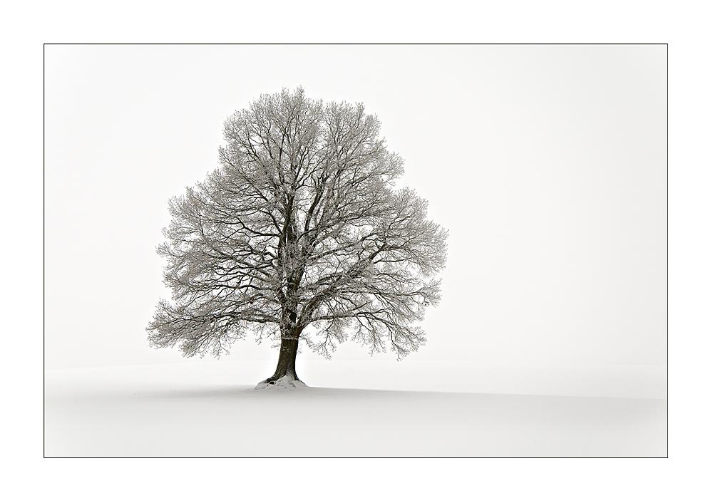 Winter im Vogelsberg II