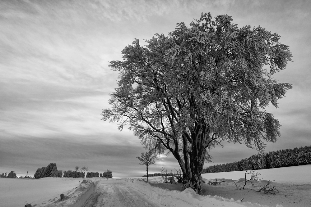 :: ~ Winter im Waldecker Upland ~ ::