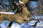 Winter im Waldpark Semper