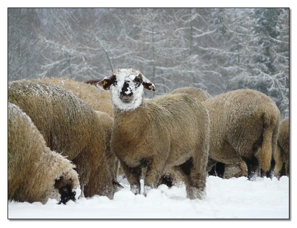 Winter im Westerwald VIII