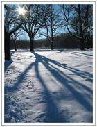 Winter im Wienerwald (1)