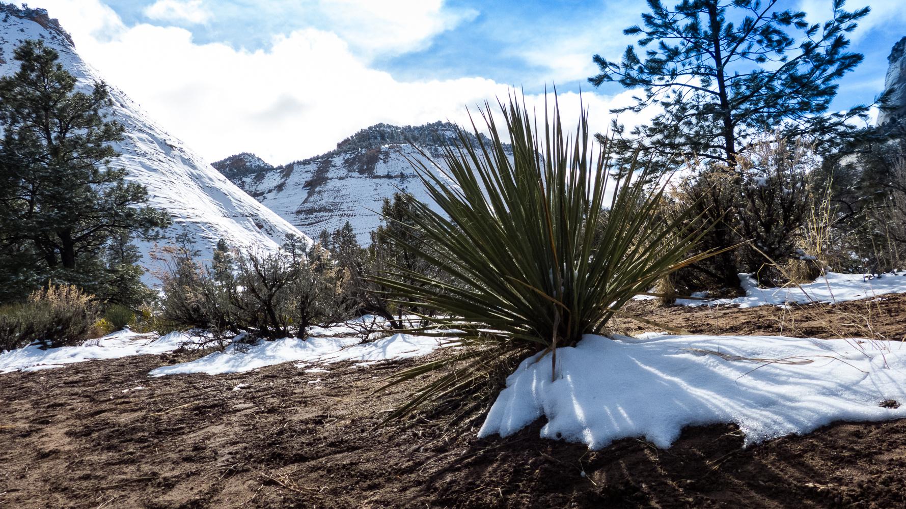Winter im Zion