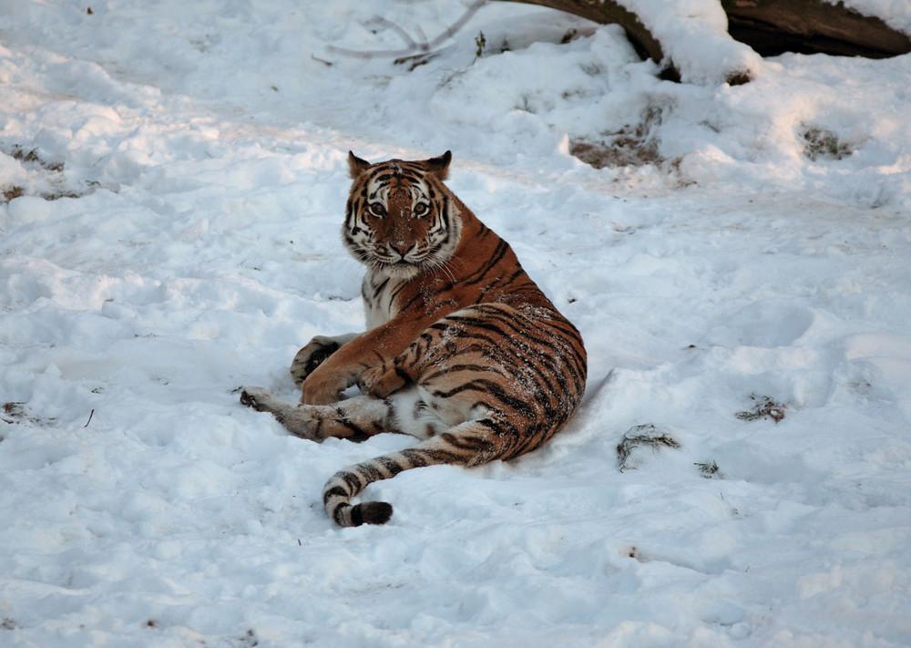 Winter im Zoo III