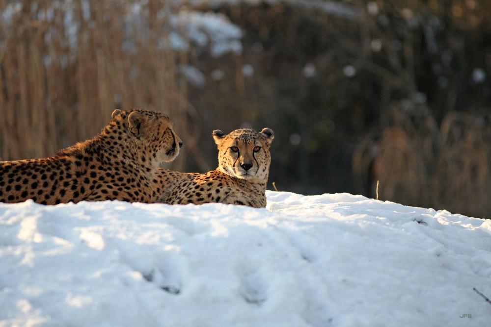 Winter im Zoo V