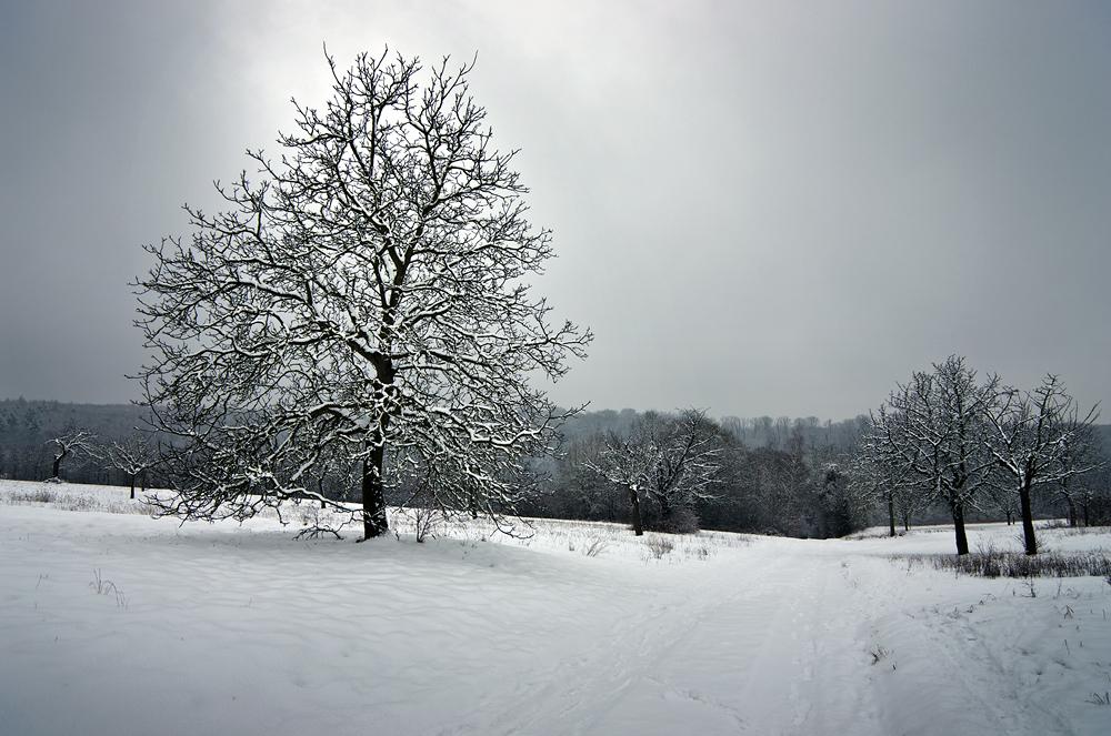 Winter Impressionen 01