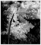 Winter Impressionen - 1.