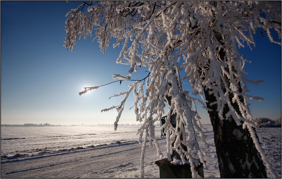 Winter Impressionen - 7.