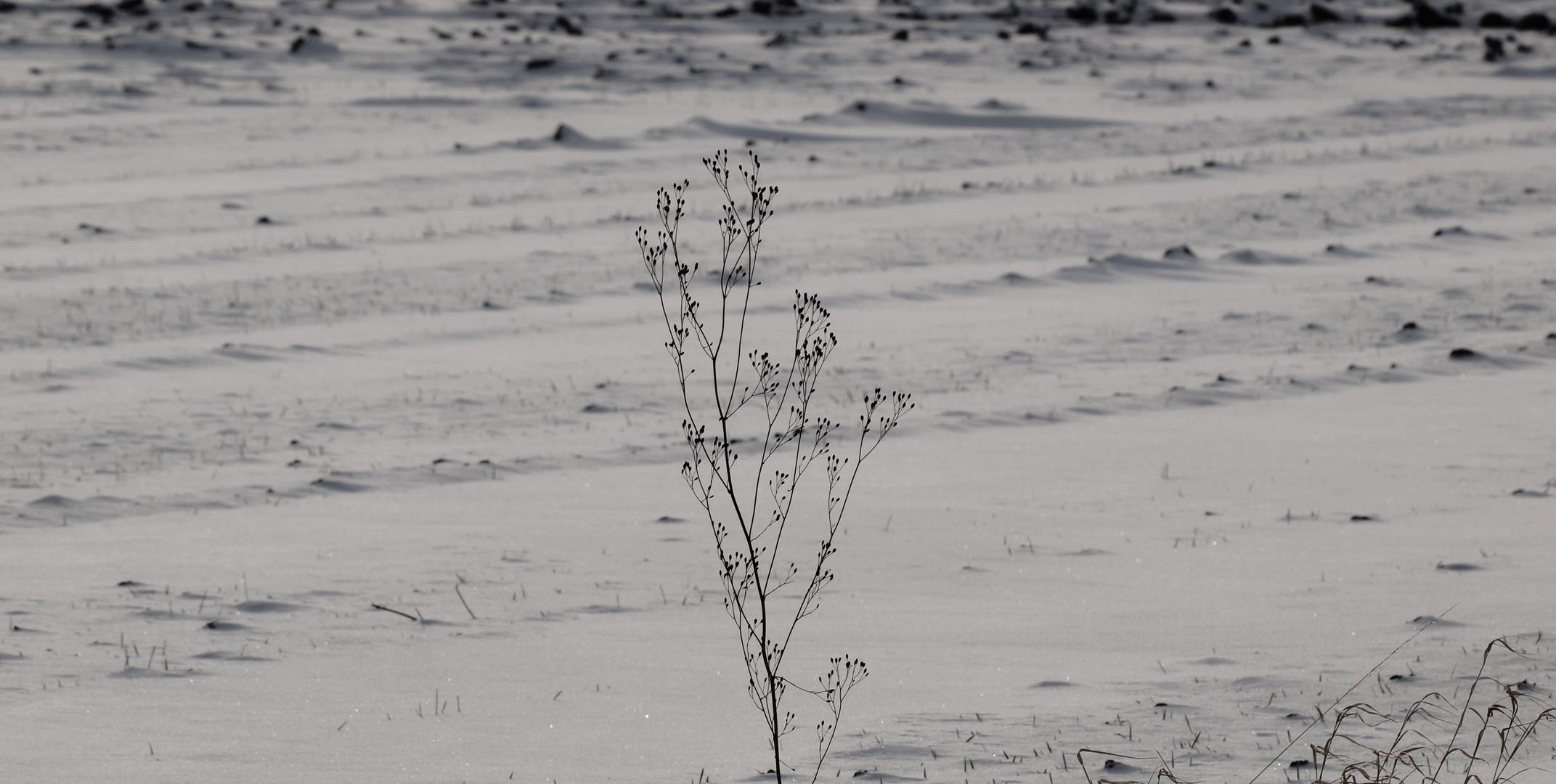 winter-impressionen ..