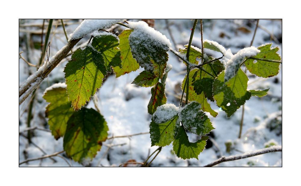 Winter-Impressionen IV