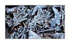 Winter-Impressionen IX