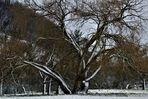 Winter Impressionen rund um die schwäbische Alb