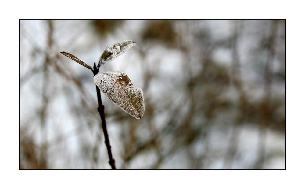 Winter-Impressionen VI
