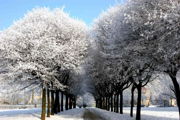Winter in a park in Plock / Poland /