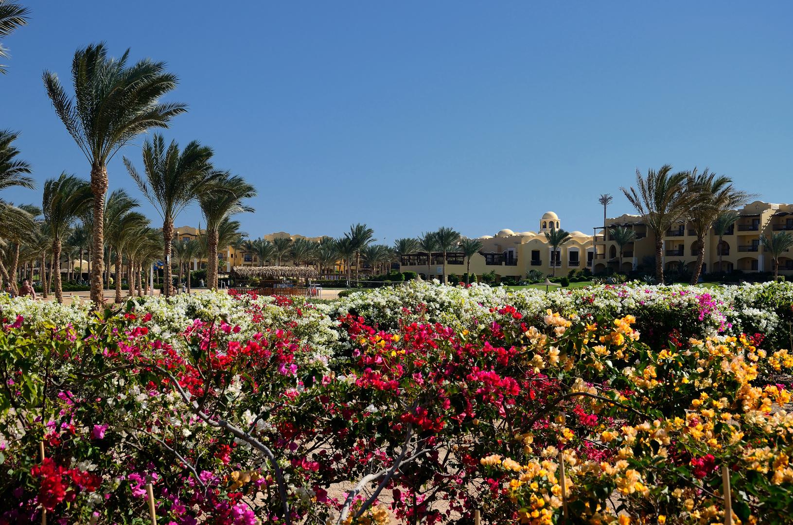 Winter in Ägypten
