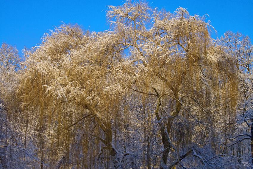 winter in berlin 03