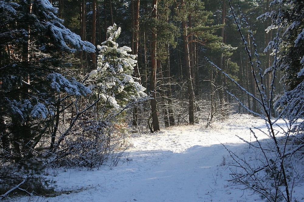 Winter in Berlin u. Brandenburg