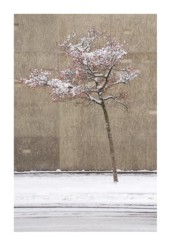 Winter in Bern beim Historischen Museum