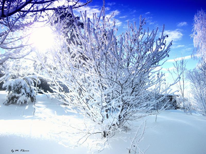 Winter in Blackwood Forest II