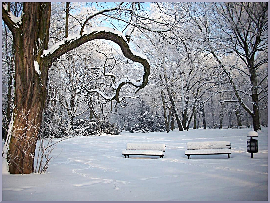 Winter in city park