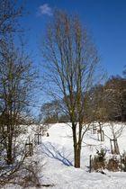 Winter in Cronenberg I