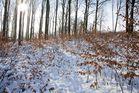 Winter in Cronenberg IV
