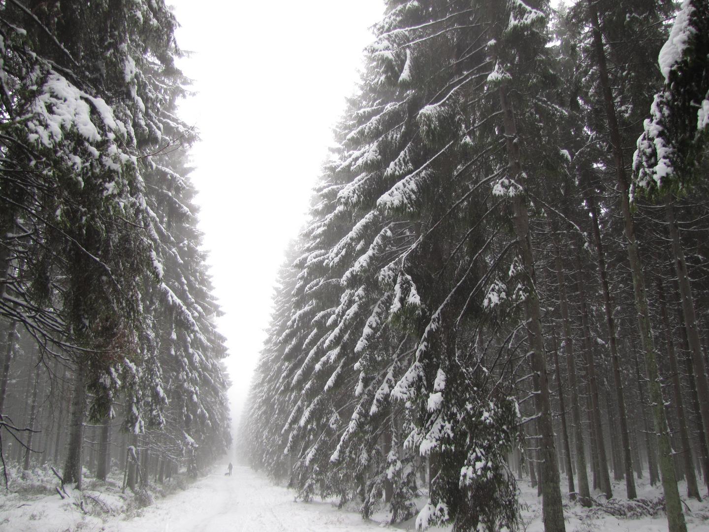 Winter in den Ardennen