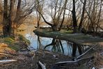 Winter in den Rheinauen 2