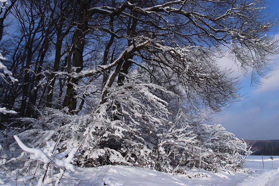 Winter in der Großstadt (1)