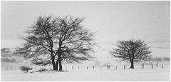 Winter in der Rhön # 0007