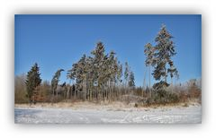 Winter in der Schneckengrüner Heide 3