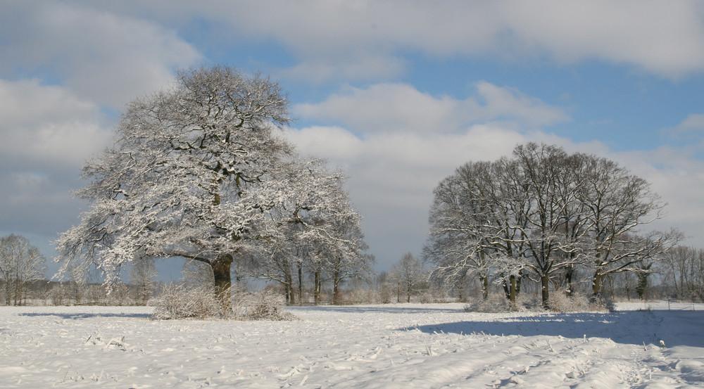 Winter in Drensteinfurt 3