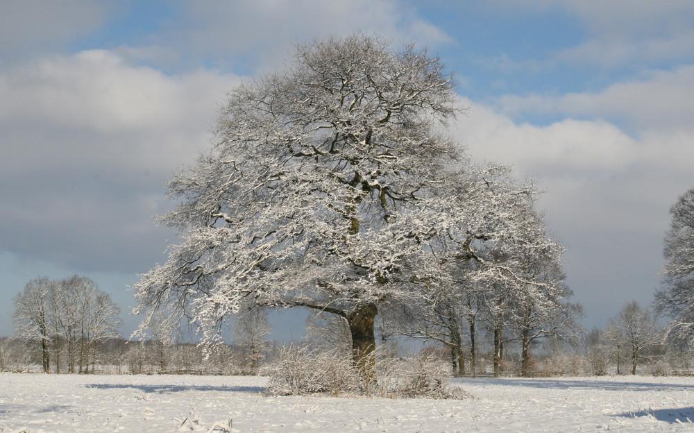 Winter in Drensteinfurt