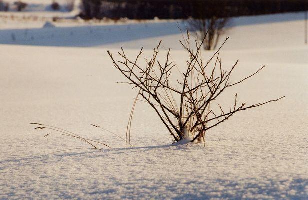 Winter in Ermland