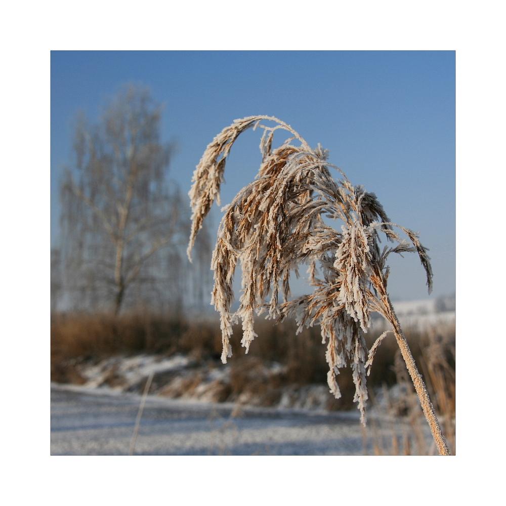 Winter in Franken (4)