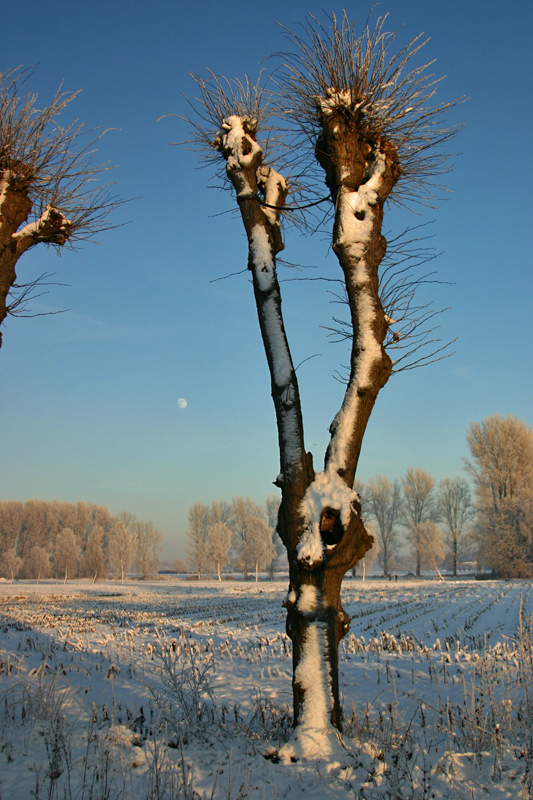 Winter in Gemen II