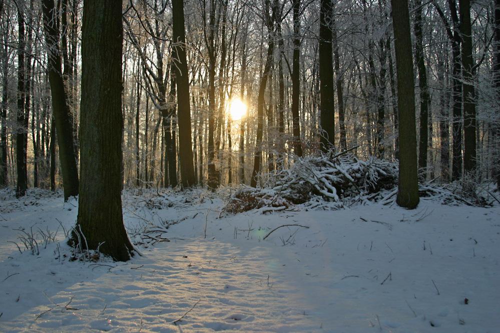 Winter in Gemen III