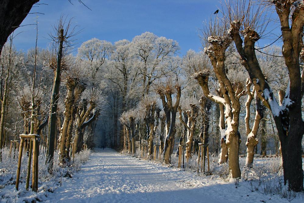 Winter in Gemen V