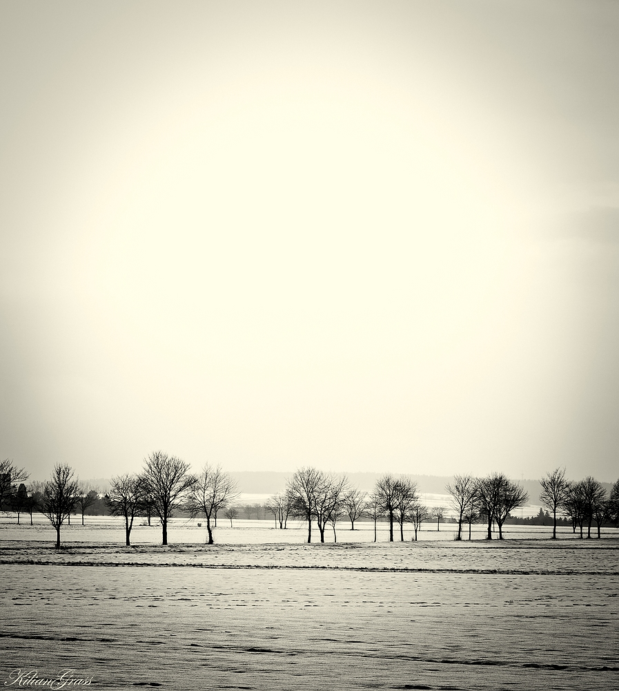 Winter in Grayscale