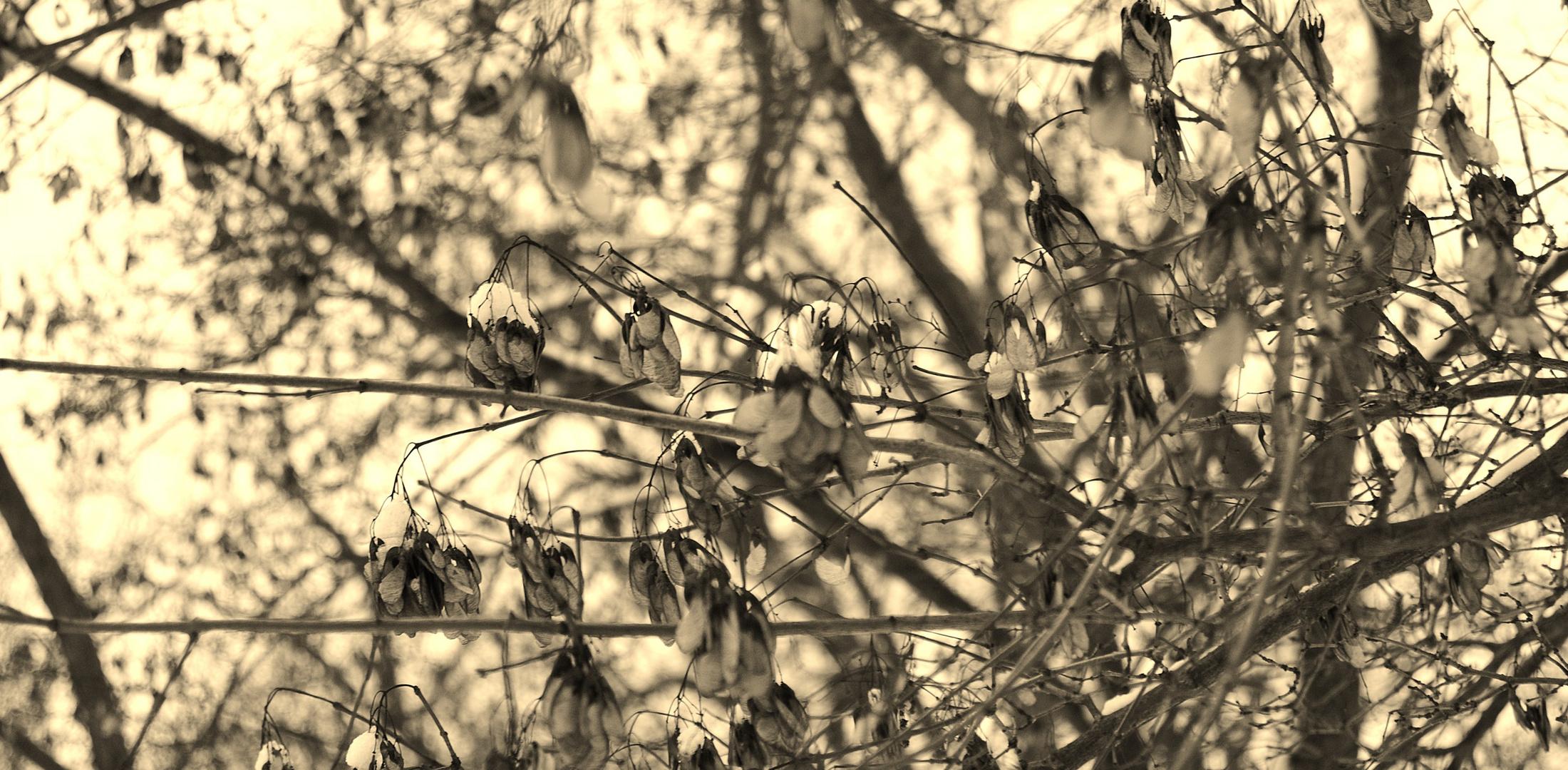 winter in kassel II