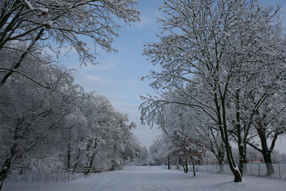 winter in magdeburg foto bild jahreszeiten winter. Black Bedroom Furniture Sets. Home Design Ideas