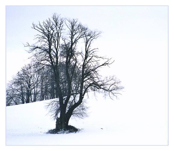 """ Winter"" in Meck/Pomm"