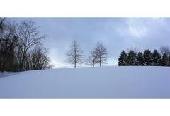 Winter in New Jersey II
