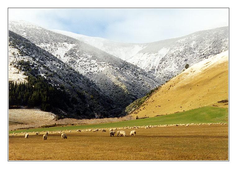 Winter in New Zealand II
