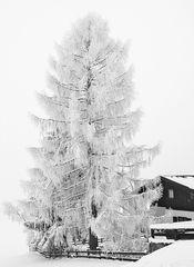 Winter in Oberau