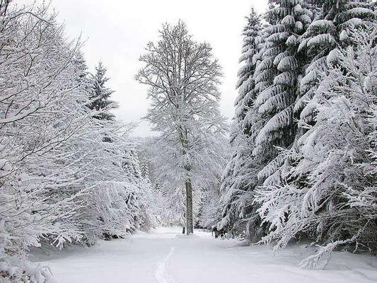 Winter in Süd-Schwarzwald-3