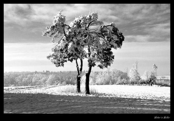 Winter in Weiler