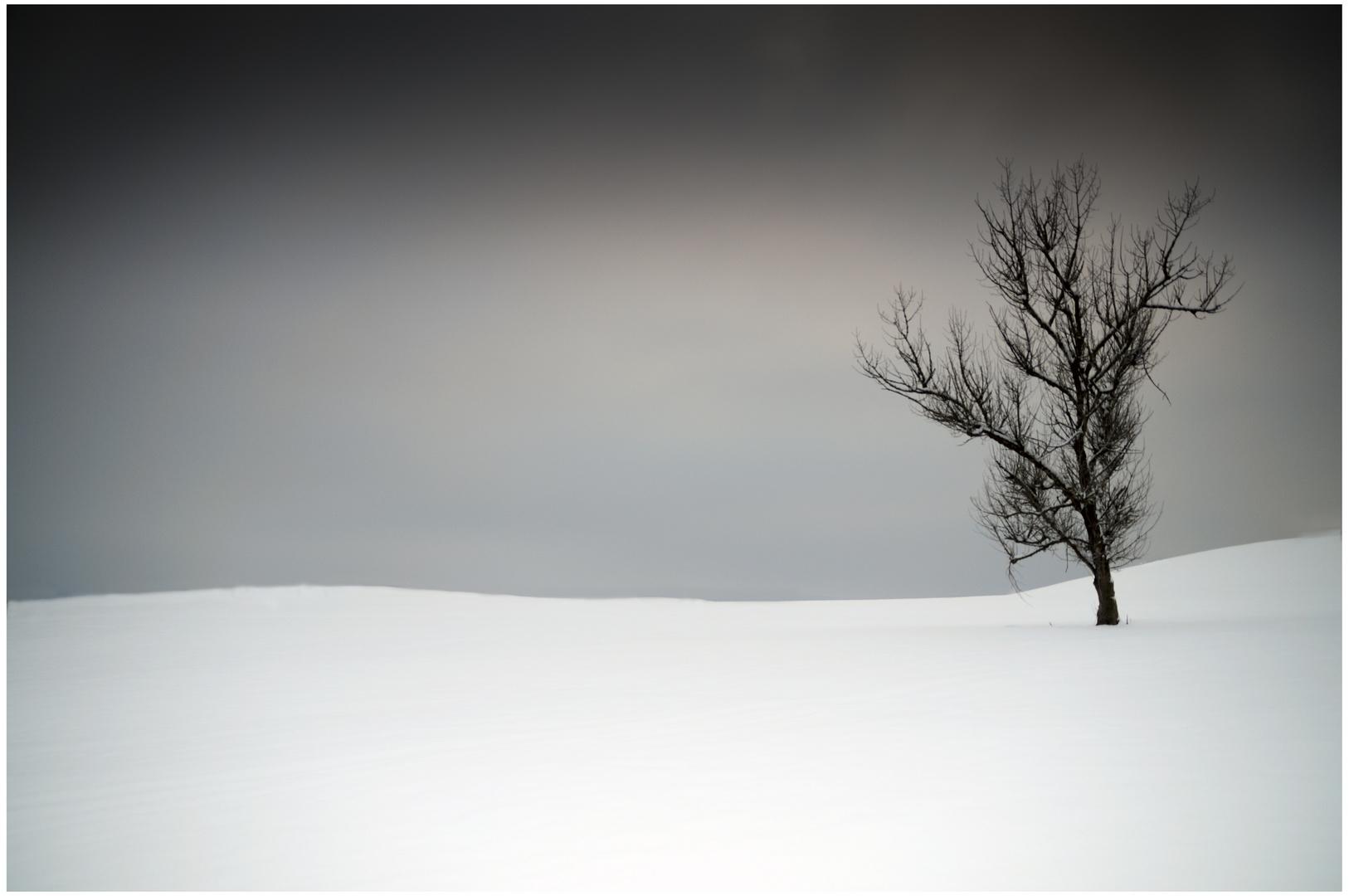 Winter ist meist...