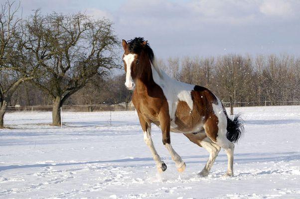 Winter ist so schön...