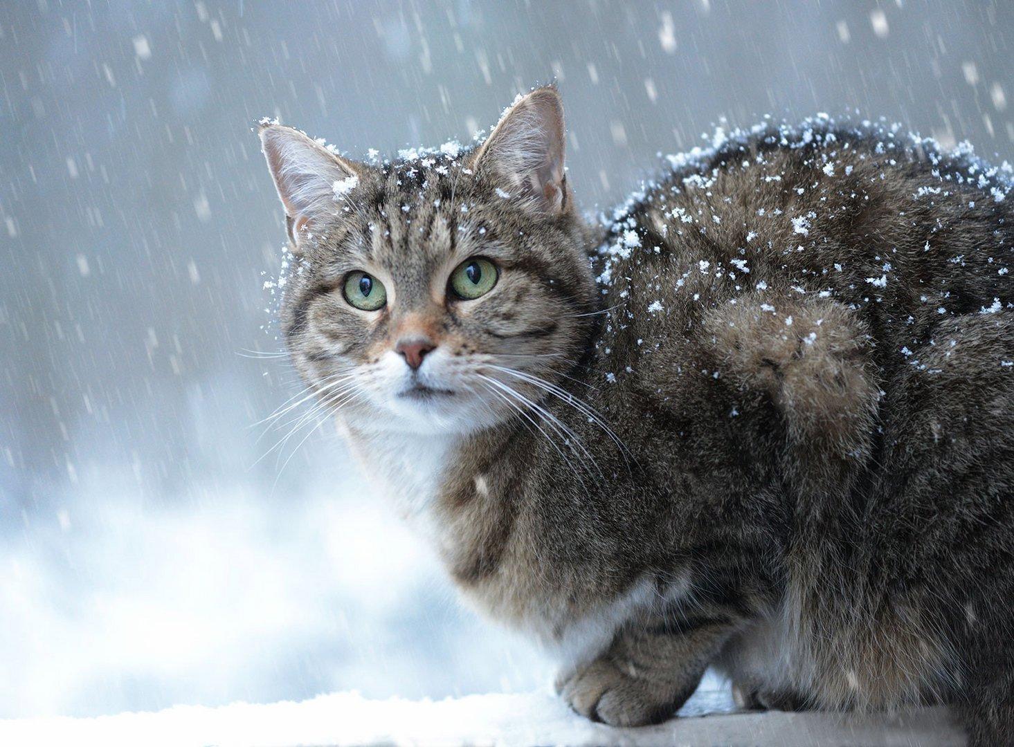 Winter ist zurück